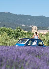 Lavande Luberon Provence voiture privée