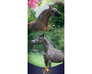 New Banner for Kingswood Horse Farm