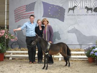 SUPREME OPEN & AMATEUR for Kingswood Horse Farm & HT Da Magic Moment