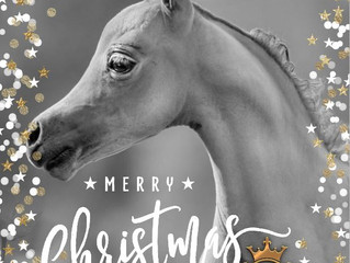 Kingswood Horse Farm wishes all their friends over the world a Merry Xmas and Happy new year!!
