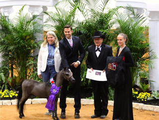 WORLD GRAND CHAMPION - Oak Bay Salsa After Dark