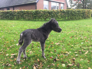 Last foal of the year is born