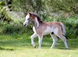 All 2020 foals have been sold