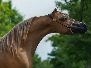 New Stallion!