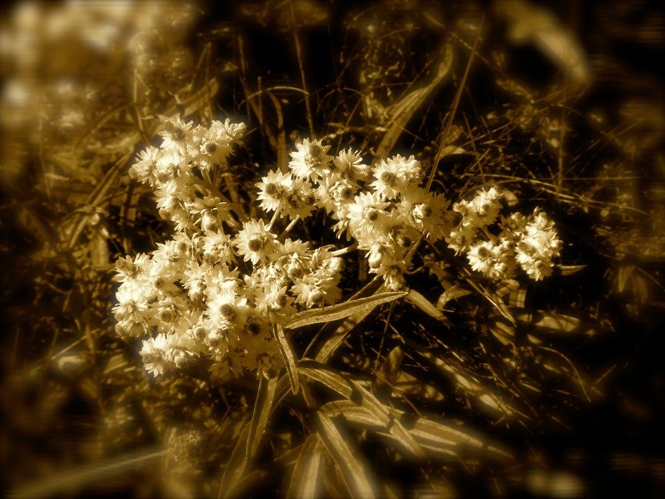 spring vallery