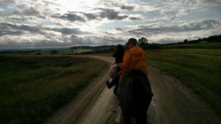 horse main