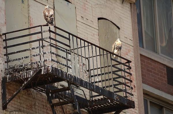 3NestAtEast96thStreet NYC Parks.jpg