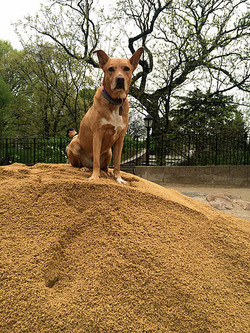 Amber on new dirt