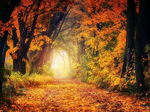 Season Glorious, A Life Reflection