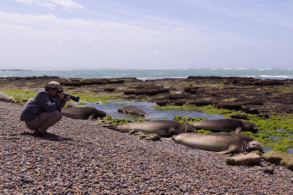 Fotografando elefantes marinhos em Punta Ninfas, na Patagônia argentina. Foto: Soldier Lopes