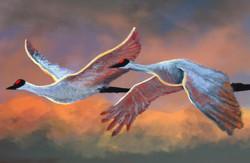 cranes final 1