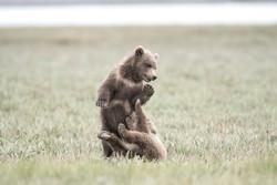 Cubs wrestle DSC_3340
