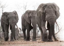 March of The Elephants DSC_3700