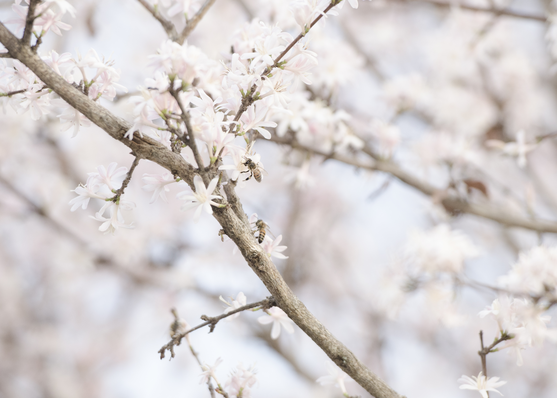 Bee Blossom_DSC1037