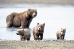 Cubs & Mom DSC_2238