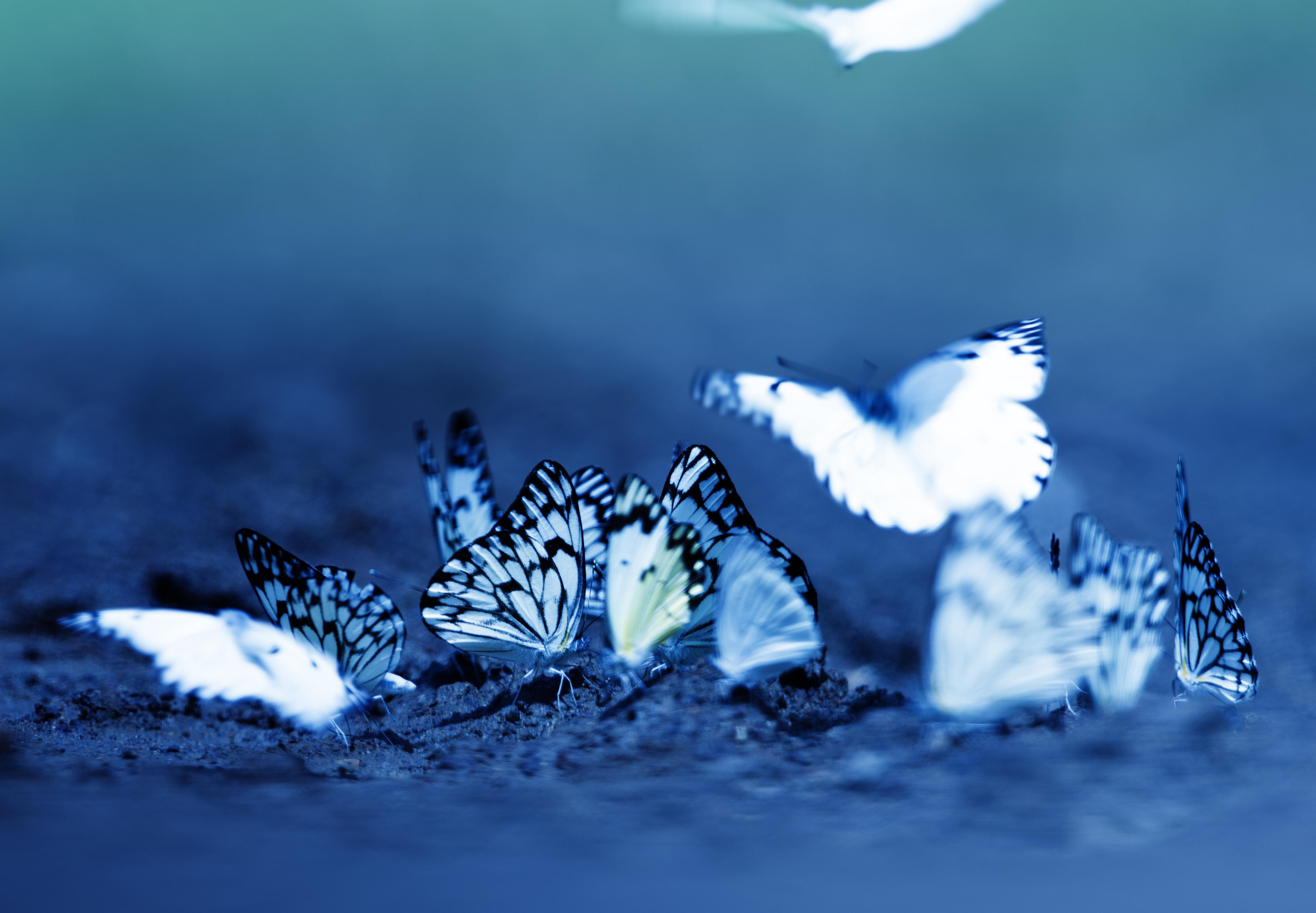 Butterflies inkyDSC_3943 copy