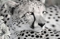 Cheetah Spots_DSC0354