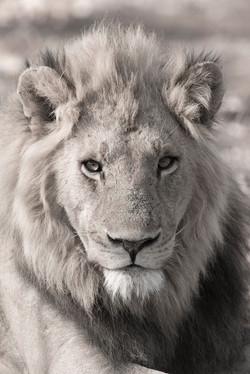 Lion King DSC_1816