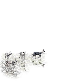 Wild dogs patchwork DSC_2014 A3