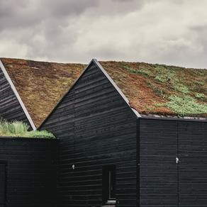 6 Gründe, warum du über eine Dachbegrünung nachdenken solltest