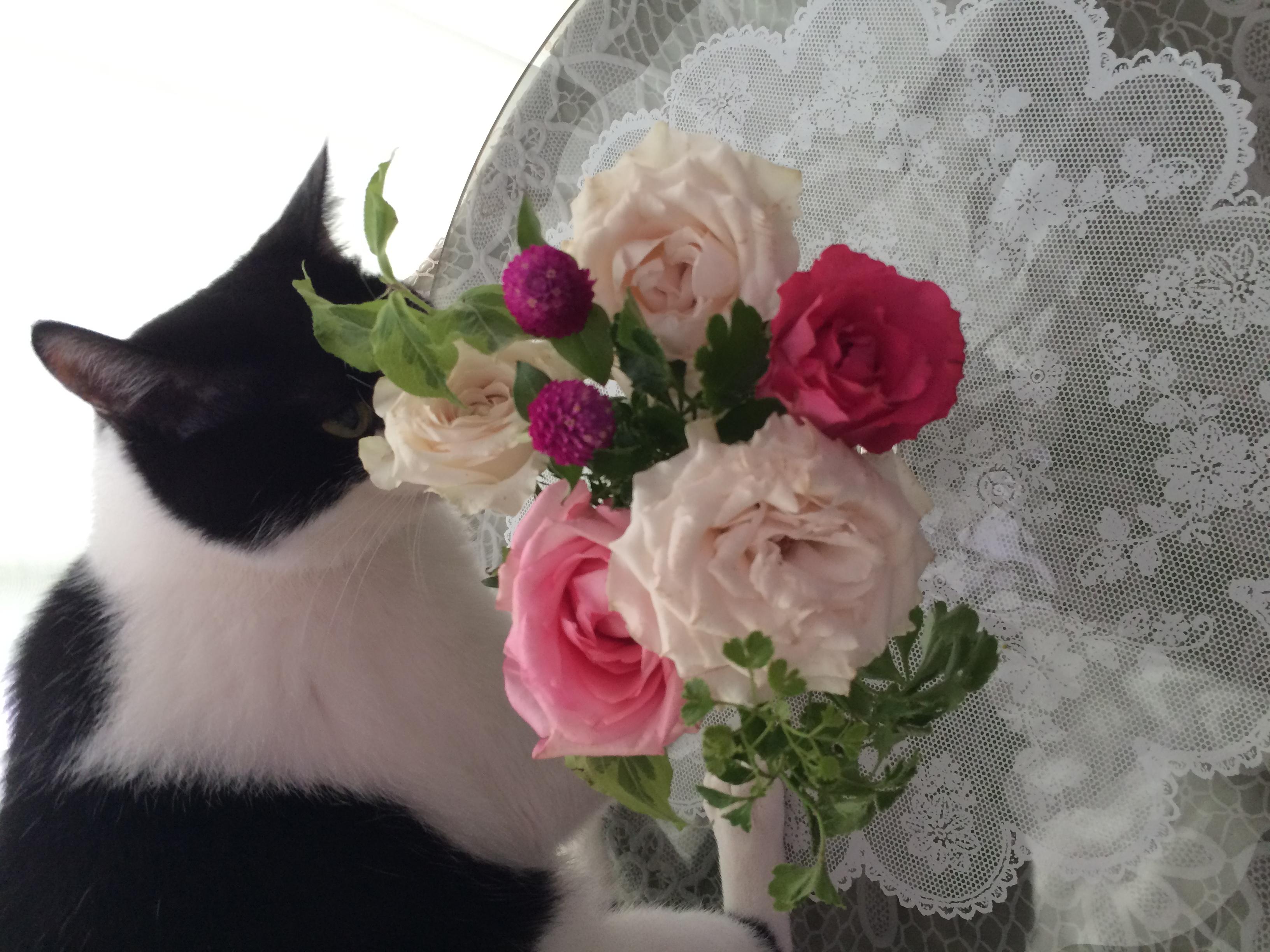 チャッピーはお花が大好きです。