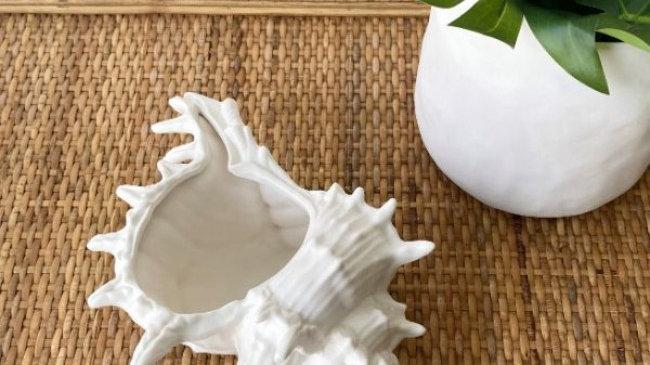 Conch Shell Trinket Bowl