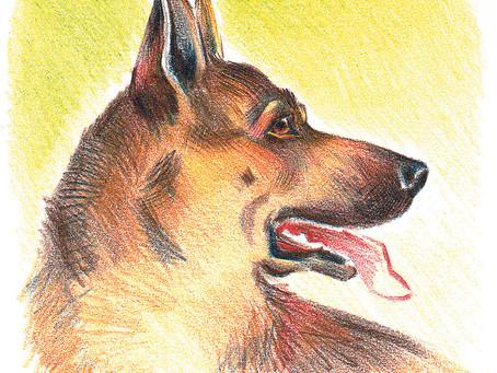 Супер пёс