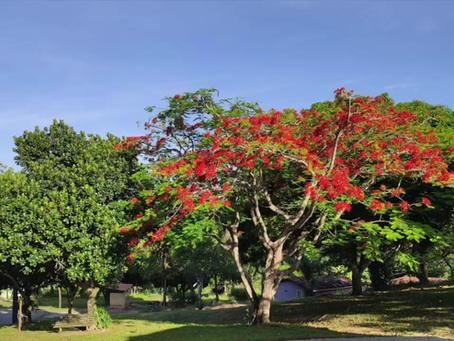 Tempo de Natal 2019-2020 na Fazenda do Natal