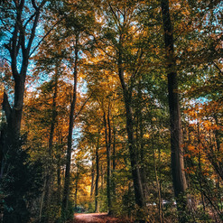 Amsterdam forest in Autumn