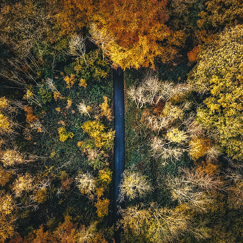 Help the Earth - Plant a Tree - Autumn Drone Photo 3