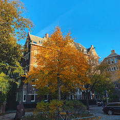 Amsterdam Autmn-2.jpg
