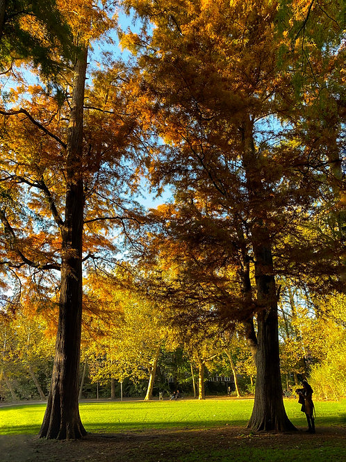 Help the Earth - Plant a Tree - Autumn Forest Walk
