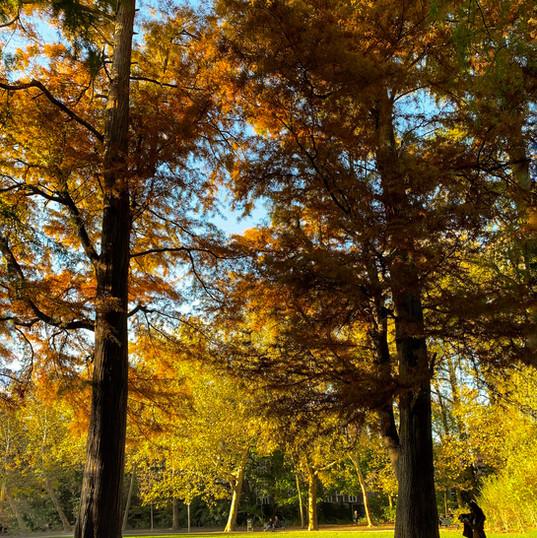 Vondelpark in Autumn