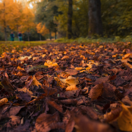 Autumn - Leaves in Amsterdam