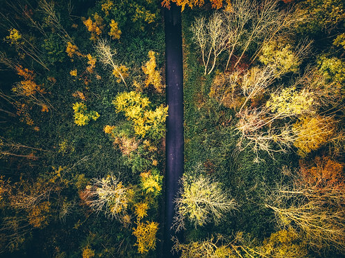 Help the Earth - Plant a Tree - Autumn Drone Photo