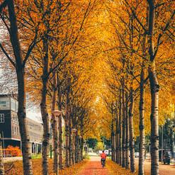 Classical bike path in Autumn