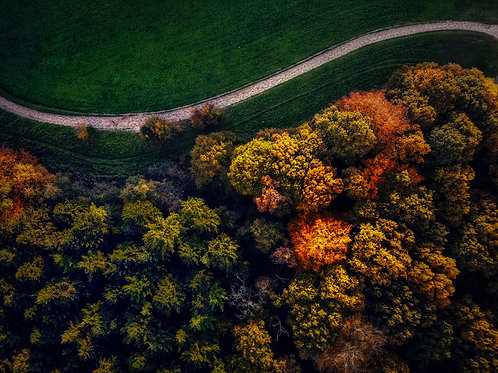 Help the Earth - Plant a Tree - Autumn Drone Photo 4