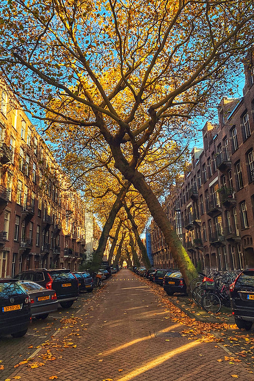 Help the Earth - Plant a Tree - Autumn in Amsterdam