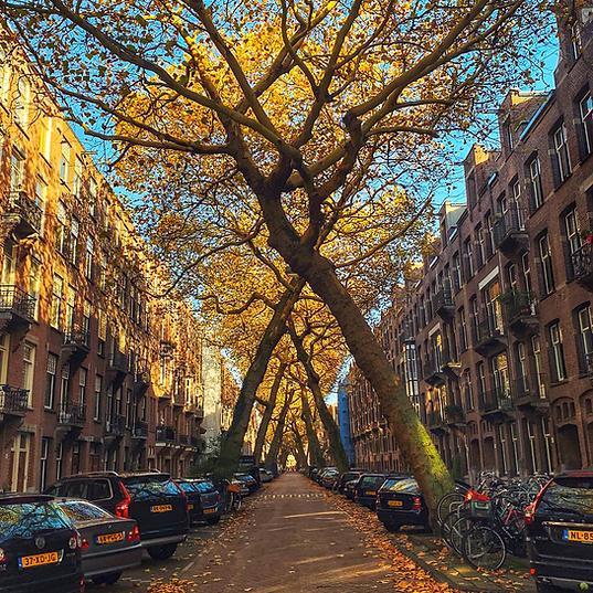 Amsterdam Autmn.jpg