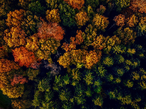Help the Earth - Plant a Tree - Autumn Drone Photo 2