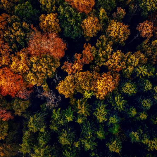 Autumn Forest in Amsterdam