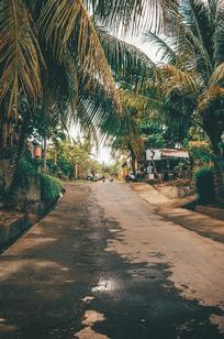 Topical Life - Bali Travel Photography