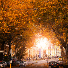 Amsterdam - De Pijp in autumn
