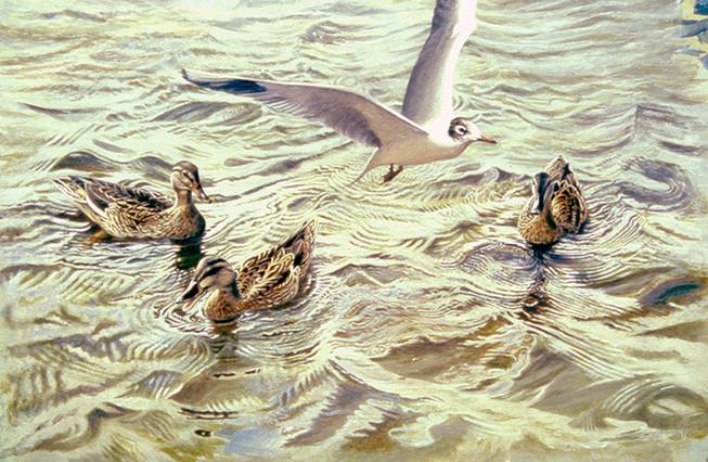 A Crowd On Hatchet Pond