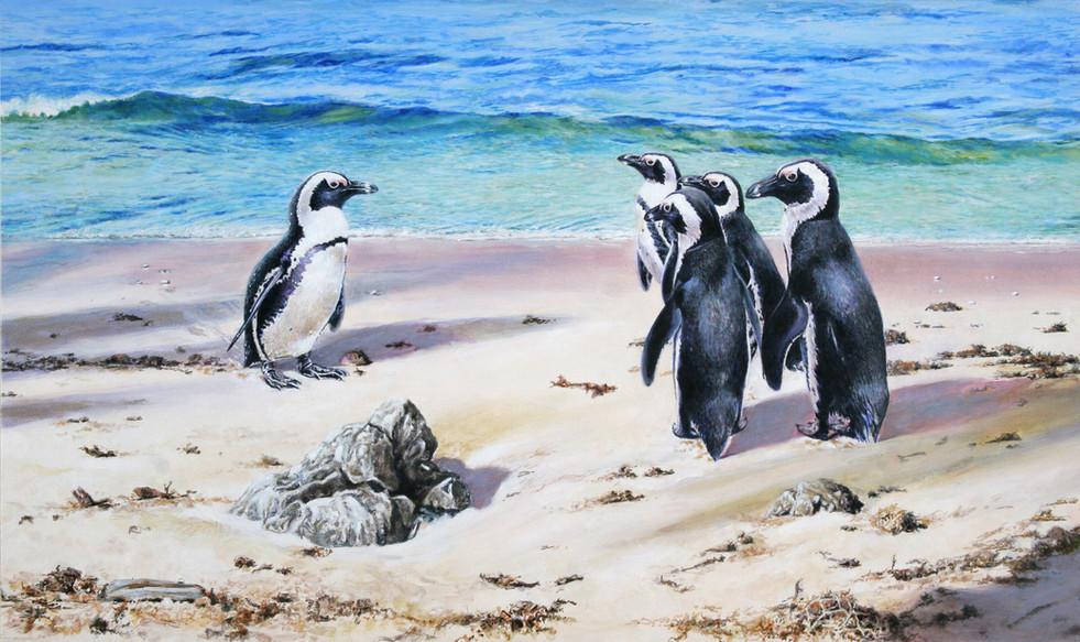 What? - Cape Penguins
