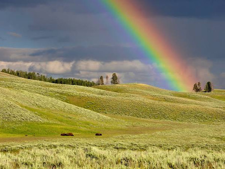 Phytonutrients: the Gold at the End of the Rainbow