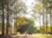 fox_and_luna_photography (11).jpg