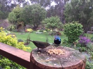 Lakeside Garden Retreat - Pemberton, WA