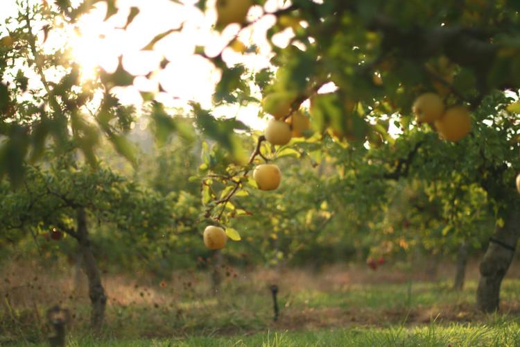 Newleaf Orchards Sparkling Juices