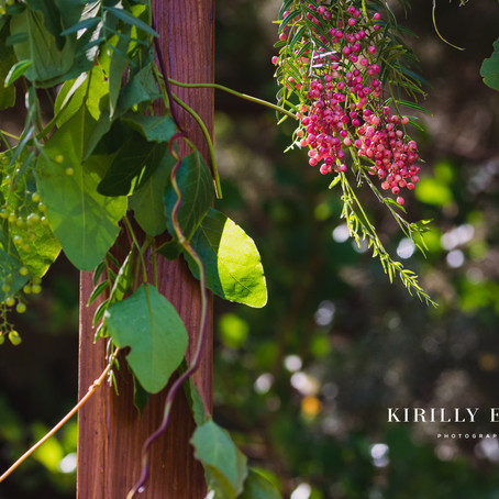 Fancy a wedding amongst the tall Karri trees? Then have a Pemberton Wedding in the Southern Forests.